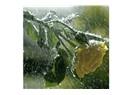 Yağmur şehri Rize