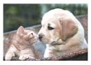 Köpek ve Kedi arasındaki fark!