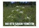 """Zehirli """"Baldıran"""""""