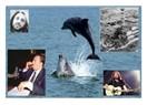 Zugaşi Berepe (Denizin Çocukları) ve Çernobil