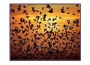 Havadaki sersem kuşlar