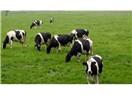 Et ithalatına iznin olası sonuçları