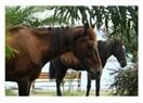 Paytoncu Atları