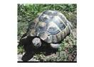 Bugün bir kaplumbağa olsam...