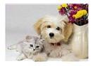 Kedi ve Köpekler Ne Zaman Kısırlaştırılmalı