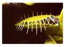 "Doğadaki mahlukatı tanıyalım: ""Kafatasiensis Turkoptera ergenekonensis"""