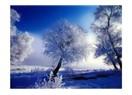 Kış ...