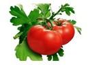 Doğal domatesim kalsın
