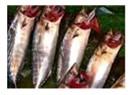 Palamut balığı hakkında ne biliyoruz