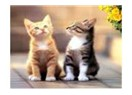 Üç kedi kardeş