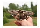 Canlılardaki mükemmel simetri