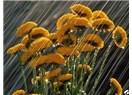 Gözlerim yağmur çiçeği