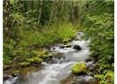 Ormana güzelleme (2)