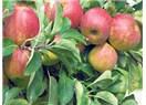 Meyve_Sebzede ISO 22000 Gıda Güvenliği Sistemi arayın, tehlikeli kimyasallardan korunun!