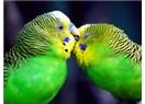 02 - 08 Ocak'da ikili ilişkilere, diplomasi ve para konularına dikkat!