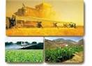 Tarımda bilgi kirliliği ve gerçekler