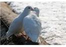 Damda gezen güvercinlerim... Tutsak ruhlu özgürlerim...