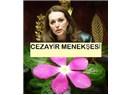 Cezayir menekşesi ve Boyer Gülü Valerie