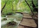 Bizi Ayıran Değil, Birleştiren Nehirlerin Yanısıra Yürümek