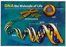 İnsan Genom Projesi