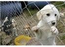 Tuzla ve Bolluca'da yaşanan hayvan itlafının tekrarlanması için çözüm öneriyorum