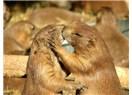...ve aşk ve adalet ve cân ve cânan ve hürriyet diyorum, daha ne diyeyim yahu!?!