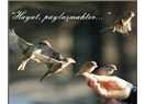 Özlü sözler ve önemi