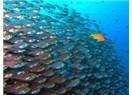 Tatlı su alığı kendini okyanusta sanırmış!