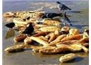 Ekmek israfı ve israfı seven ülkemiz insanları