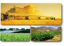 Gelecek tarım sektöründe