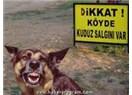Kuduz köpek tehlikesi!
