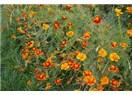 Ölü çiçekler
