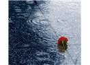 Yağmur altı