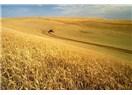 Buğday fiyatı ne olabilir-2012
