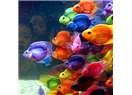 Milliyet denizinden blog (balık) tutmak-1