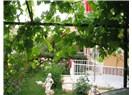Arap sabununun ev ve bahçedeki mucizesi