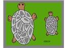 Oğlumla beraber büyüyen Küçük Kaplumbağa