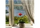 Sardunya çiçeğinde sevgi