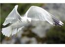 Güvercin uçuverdi