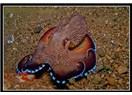 Anne ahtapot ölümü pahasına yumurtalarını bırakmıyor