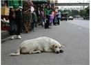 Köşe yazarı ile sokak köpeği arasında benzerlik var mıdır?