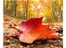 Sarı yaprakların düşmesiyle başladı, yaklaşan son baharın ilk hüznü…