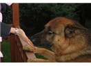 Ölen köpeğimle iletişim
