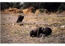 Açlıktan ölmek üzere olan Kız Çocuğu ve Onu yemek üzere bekleyen Akbaba.
