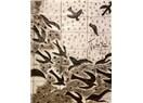 İlk kadın seramik sanatçımız Füreya Koral