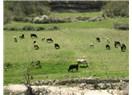 Çiftçiye yapılacak en büyük destek, çayır ve mera alanlarının genişletilmesi ve ıslah edilmesidir