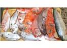 Beş ilde, on parmak balık yeme organizasyonu!