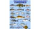 Yasa dışı balık ticaretine son.. Lütfen imzalayın!