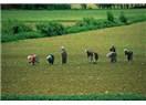 Türkiye tarımının genel özellikleri