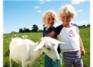 Keçi tarımına giriş, dikkatli bir fizibilite ve bolca sevgi ister